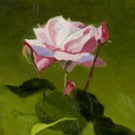 Pink Rose and Buds